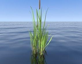 reeds 3D