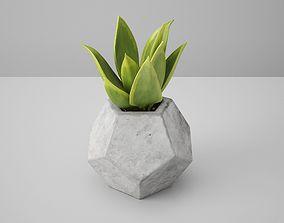 3D Dodekaeder Concrete Potted Cactus