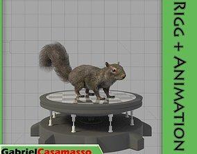 Squirrel 3D asset