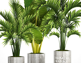 Collection of tropical plants 2 3D
