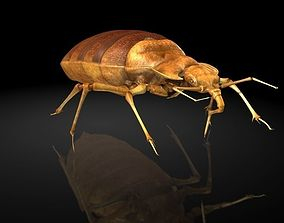 3D model Insect Collection 6 bedbug