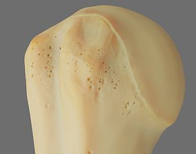 low-poly Humerus 3d Model - Anatomically Accurate