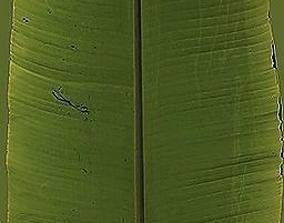 3D model Leaf Sample Texture