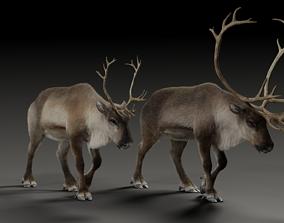 Male ReinDeer and Female ReinDeer 3D