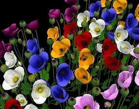 3D model Papaveraceae flower