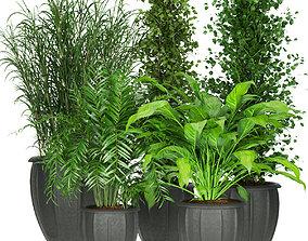 Collection plant vol 231 3D model