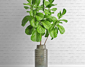 Ficus lyrata in vase 3D model