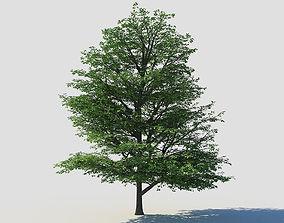 Deciduous tree 1 3D model