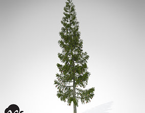 XfrogPlants Grand Fir 3D model