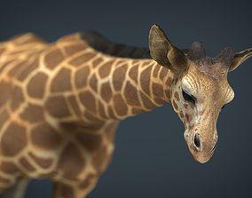 3D asset Giraffe