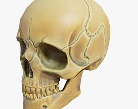 3D asset Skull Low Poly -Blender