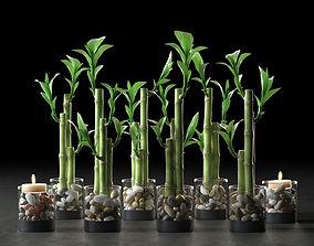 3D Lucky Bamboo Centerpiece