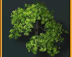 3D model Tree - set 02 forest