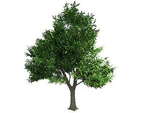 3D model low-poly Green Ash Tree