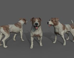 rigged Jack Russell Rigged LowPoly Dog Model