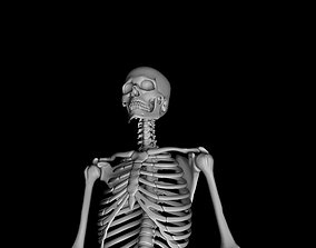3D Male Skeleton Model - Human Skeleton 3D animated