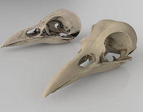 3D anatomy Raven skull