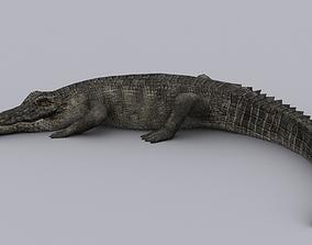 Crocodile 3D Models | CGTrader