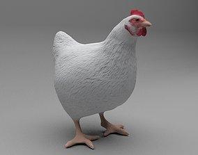 3D Chicken animals