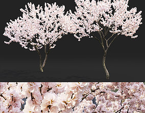 3D Malus flowering 04