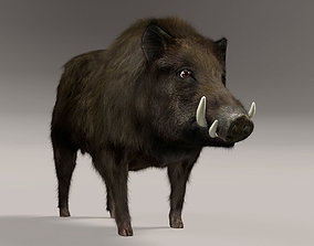 3D model animated Wild Boar