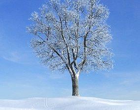Large Snowy Tree 3D model