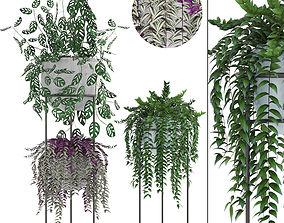 3D tropical Collection plants