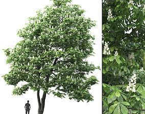 3D model Chestnut-tree 02 H12m