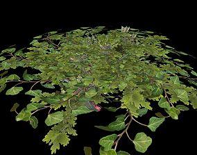 3D model Lush bush