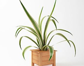 House Plant With Wooden Planter 3D model