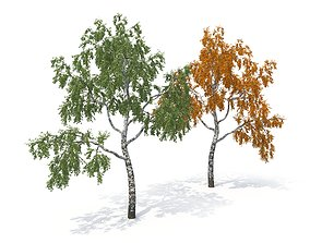 3D model Birch Tree No 1 Two seasons