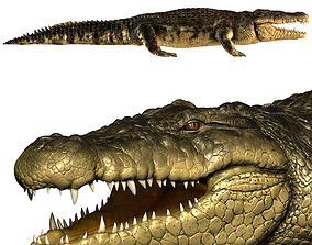 nature Crocodile 3D
