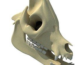 Pig Skull 3D skull