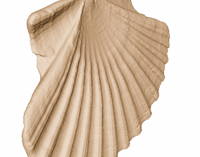 scan scallop shell for 3D printing water