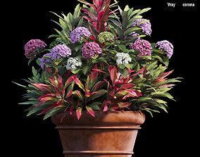 3D model Hydrangea in planters set 07