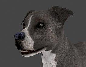 3D MPIT-008 Animated Dog