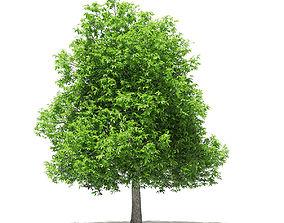 3D model Avocado Tree leaf