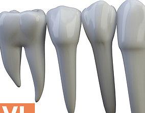 Teeth Low poly Turbosmooth 3D model