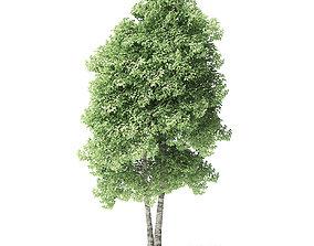 bark Red Alder Tree 3D Model 6m