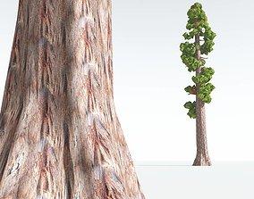 3D asset EVERYPlant Coastal Redwood Cartoon 03 --12