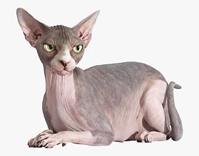 Sphynx Cat Bicolor Rigged 3D animals