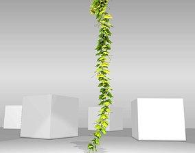 Grape Vine Version 10 3D model