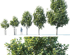 3D model Common oak Nr1 H3-9m Five tree set