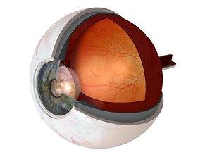 Eye Anatomy Cutaway 3D