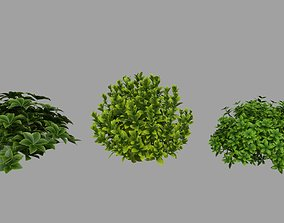 Bush Plant 3D