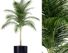 Plants collection 160 3D model