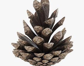 3D Pine Cone 001