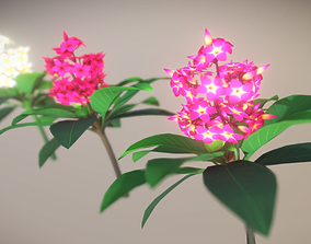3D model Plumeria Flower