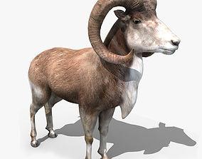 Goat Rigged 01 3D model