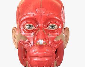 3D Full Head Muscle Anatomy
